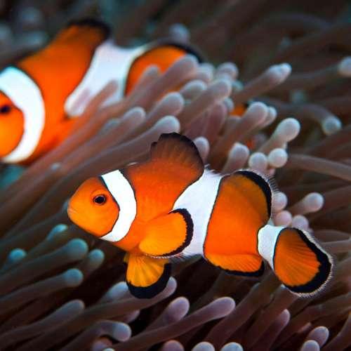 Cung Cấp Cá Biển – San Hô Biển