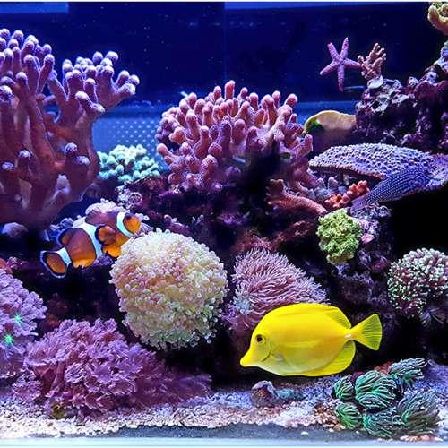 Bảo trì – Bảo Dưỡng Hồ Cá Biển